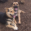 DIVOT (florida girl), MADDIE (indiana stockdog) PLAYMATES