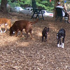 BOOTS (boxer), RIPLEY (lab), ROO (special), TYSON (boxer)