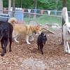 Chase, Skye, Roo, Rudy