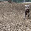 LEXXI (pup)  Ball Chase