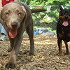 LEXXI (pup) & BROOKLYN