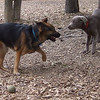 HARLEY (new ) & Lexxi (pup)