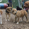 MOLLY (beagle), POOMBA (pup), MADDIE, ROCKY FB JUNE