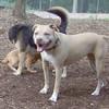 LUCY (pitbull), MADDIE, LUNA