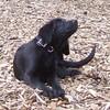 HARVEY (wendy s pup) 4