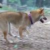 FOXI running.