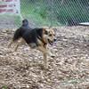 MADDIE (indiana stockdog) (05/17/07)