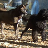 REGGIE (akita), MOBY (portuguese water dog), RUDY (handsome mix)