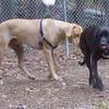 DUSTY (just rescued) (frank & jenn) 2