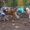 GROUP ( w  cowgirl, dogzilla)