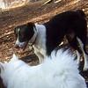 CHLOE (8 mo. border collie mix)