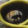 FLINT (portuguese water dog) 2