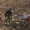 FAITH ( terrier) & TIKI