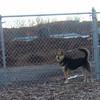 MADDIE (at pleasantville dog park)