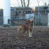 MAX & SHAMUS (pleasantville dogpark)