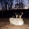 MADDIE (pleasantville dogpark) 2