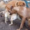 Ebberston (ridgeback pup),  Rocky (puggle), ZIM.
