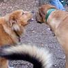 ZIM (12 yr.), BUFFY, MADDIE (the tail)