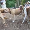 AVERY (pitbull mix), MONTY (island dog), LUCY  (pitbull)