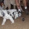 PITA (dog on wheels)