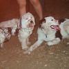 PITA (dog on wheels), MARLEY (aussie mix boy pup)