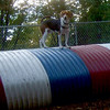 HENRI (beagle) TUBE