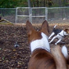 HENRI (beagle), WELLIE (labradoodle), SHAMUS (basenji)