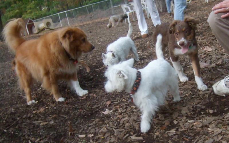 BAXTER (pup), ISABELLA, SAMBUCCA, ZIM