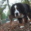 SAMMY ( future sampson, 5 months)