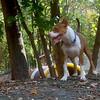 ALFIE (pup 10 months, pitbull mix)  (10/20/07)
