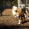 ALFIE (10 month girl pup, pitbull mix)  (10/20/07)