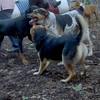 CALI (perrier mix, pointer/terrier) Rex, Maddie