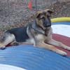 KAISER (german shepherd pup, 5 months) tube