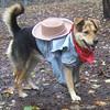 MADDIE (cowgirl)