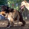 FOXI (shiba inu), STORM (portuguese water dog), DIVOT (florida girl)