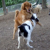 Dakota, Marley ( pup ), Mya