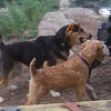 Chase ( Lakedale terrier), Maddie, Percy