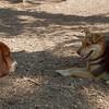 MADDIE,  BUSTER (basset Hound Pup)
