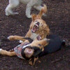 Luna (cockapoo pup) Ruby (coonhound pup)