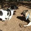 BEAUREGARD & elkhound