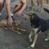CHARLIE ( F  puppy ) & Maddie