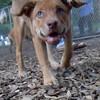 CHARLIE ( girl puppy )