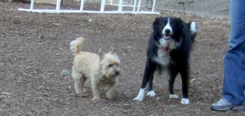 BARCLAY & Rocky ( cairn )