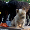 Rocky ( cairn ) & Moby, Storm