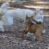 BERNIE & CHARLIE ( girl pup )