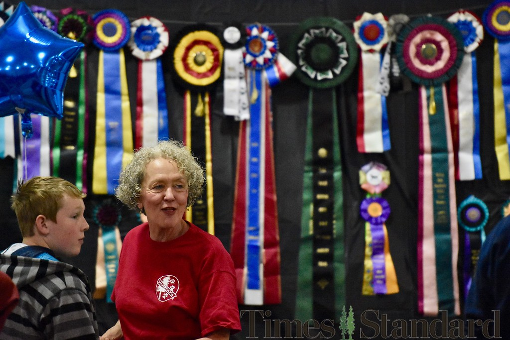 . Beverly Morgan Lewis stands in front of her many Pembroke Welsh Corgi awards amassed over her many years performing with her dogs. José Quezada�For the Times-Standard