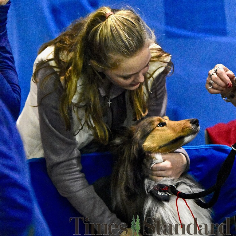 . Gabrielle Wadsworth gives a Shetland Sheepdog a big hug. José Quezada�For the Times-Standard