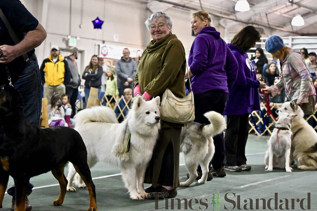 . Samoyed Roo Roo, 2, is held by Altan Tranum in the pet parade. José Quezada�For the Times-Standard