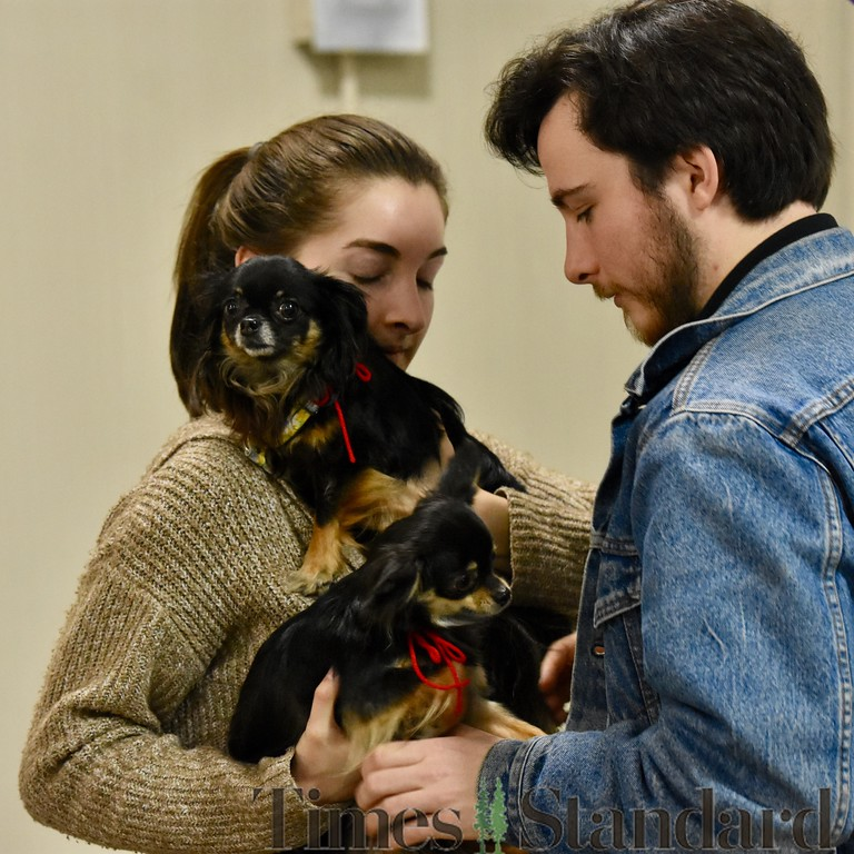 . Hayley Warren and Cameron Seeger switch holding two long-haired Chihuahuas,  Daisy and Olive. José Quezada�For the Times-Standard