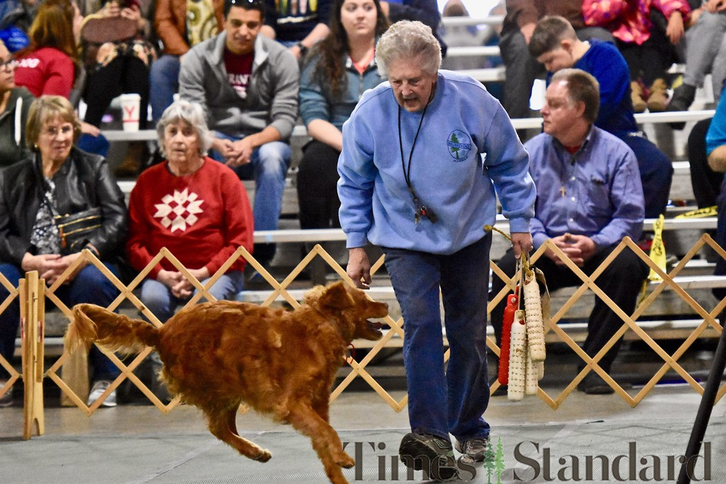 . Some retriever work is performed by owner Pat Johnson and her Golden Rtriever Kai, 6. José Quezada�For the Times-Standard